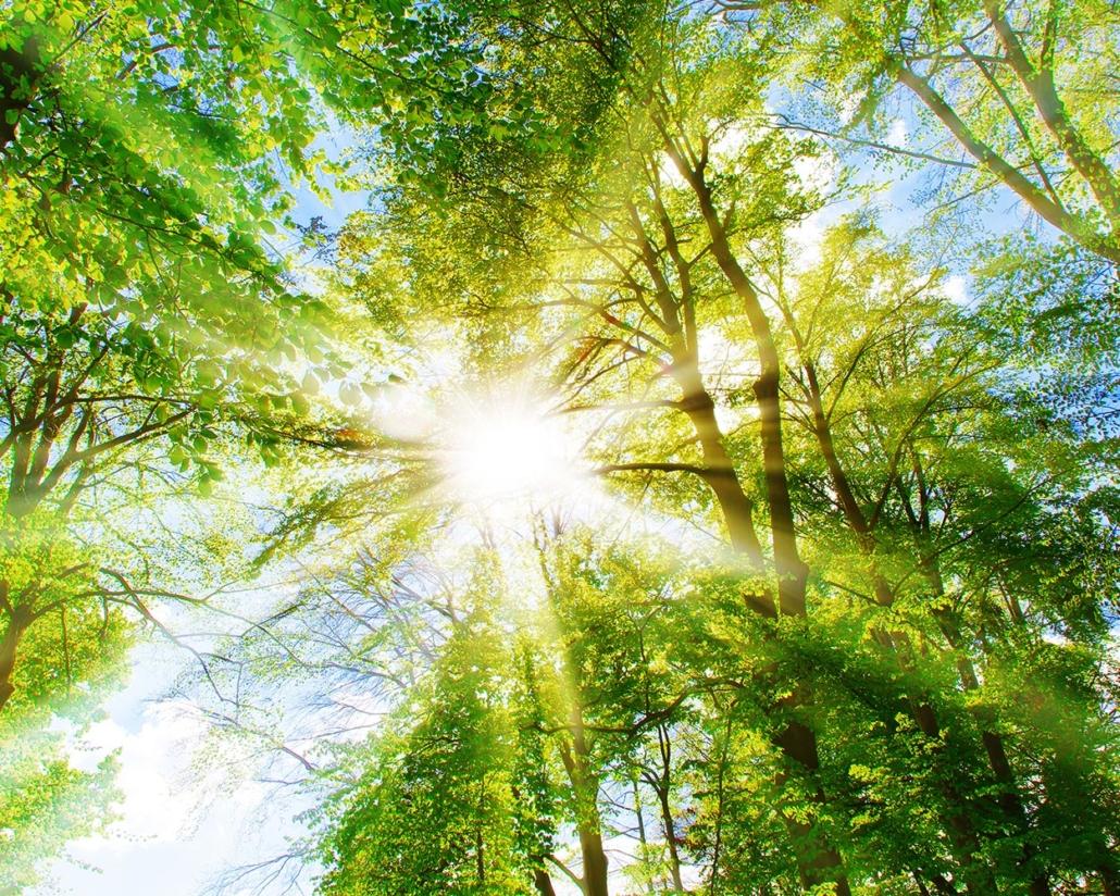 Software/APP für Baumkontrollen: StraKo Baum von Sysmo .Titelbild zeigt Baumkrone, durch welche Licht fällt.